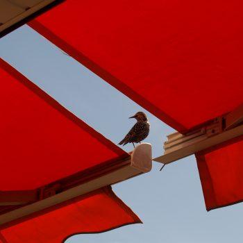 Oiseau sur un store